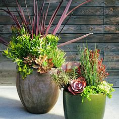 Succulent mini landscape - Cool Container Gardens - Sunset