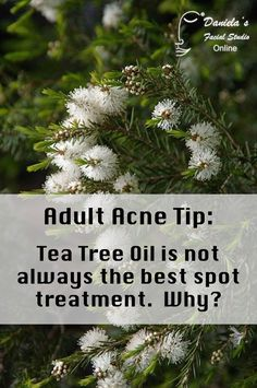 """Tea Tree can be great for new """"pop-able"""" zits.  Anti-bacterial on a superficial basis.  Also analgesic.  However, with a scab or only redness (nothing comes out when you squeeze), it's not an effective anti-inflammatory.  Read more on The AcneWhisperer Blog!"""
