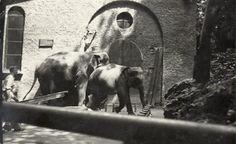 Storie di Milano: Lo zoo dei Giardini Pubblici di Milano Zoo, Milano, Horses, Vintage, Events, Belle, Italia, Happenings, Horse