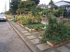 the great front yard vegetable garden controversy