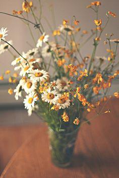 flowers from the wildflower field.