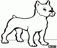 Bulldog With Its Short Tail And Upright Ears Coloring Page