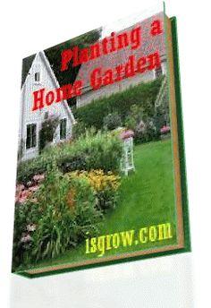 Planting a Home Garden