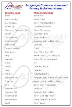 Budgerigar Common Name and Primary Mutations Names. Wellensittich-Common Name und Primärmutations-Namen. Breeding Budgies, Parakeets, Parrots, Love Birds Pet, African Lovebirds, Bird Breeds, Bird Aviary, Common Names, Amigurumi