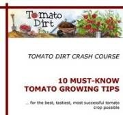 Why a tomato cracks and what to do about it