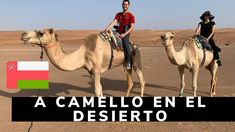 Camel, Facebook, Youtube, Animals, Socialism, Social Networks, Life, Animaux, Animales