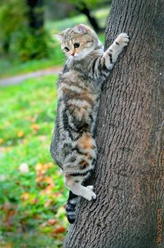 """""""The reason cats climb is so that they can look down on almost every other animal--it's also reason they hate birds."""" --K C Buffington"""