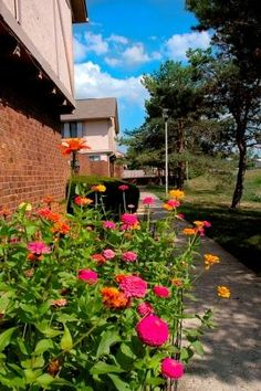 Carnaby Village Townhomes are beautiful Columbus apartments, located on McNaughten Road, just east of Basement For Rent, Townhouse, Apartments, Ohio, The Unit, Plants, Beautiful, Columbus Ohio, Terraced House