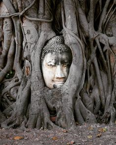 A beautiful look at the Land Of Smiles through these incredible photos of Thailand: from Bangkok to the beaches of Thai islands. Garden Sculpture, Lion Sculpture, Southeast Asian Arts, Thai Islands, Thailand Travel Guide, Wow Factor, Wow Products, Bangkok, Travel Photos