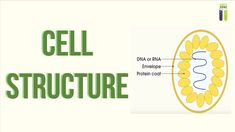 A-Level Biology Revision - Part - Cell Structure A Level Biology Revision, Plant And Animal Cells, Science Cells, Cell Structure, Education, Onderwijs, Learning