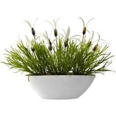 Nearly Natural Grass & White Floral w/White Planter (Indoor/Outdoor) ($50) ❤ liked on Polyvore featuring home, home decor, floral decor, plants, fillers, flowers, decor, flower planters, flower bowl and white home decor