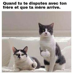 Quand tu te dispute avec ton frère et que ta mère arrive !!!     monchatdore.com    #fun #lol #comic #drole #humour