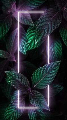 Neon Light Green Foliage iPhone Wallpaper - iPhone Wallpapers