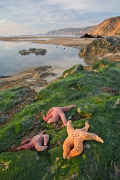 Three stars, during low tide at Point Reyes National Seashore. #waterlust Discovered by Always Wanderlust at Point Reyes, Marin County, California