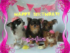 Verjaardag chihuahua