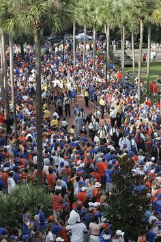 Game day in Gainesville.                               Love it