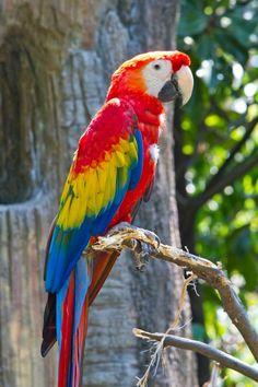 Exotic Birds, Colorful Birds, Pretty Birds, Beautiful Birds, Animals And Pets, Cute Animals, Parrot Pet, Flightless Bird, Mundo Animal