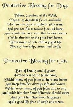 Blessing for Dogs and Cats, witchcraft and white magic spells, animals protection spells, pets spells for protection, powerful spells