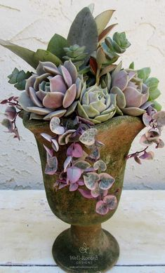 Well- Rooted Designs_Mossed Urn, String of Hearts & Lovely Lola