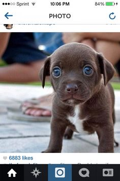 Omg now melt and bend the this puppy's will!