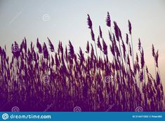 Photo about Natural gravel lake. Photographed at sunset. Slovakia. Image of beautiful, diversity, landscapes - 214471852 Animals Images, Diversity, Landscapes, Tapestry, Stock Photos, Sunset, Natural, Beautiful, Paisajes