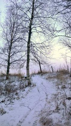 Winter in Ikaalinen