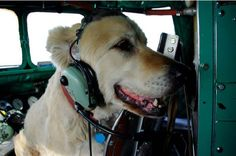 Ice Pilots: Sophie the dog is the unanimous favorite co-pilot among passengers at Buffalo Airways.  Photo credit: John Driftmier