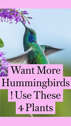 Flowers That Attract Hummingbirds, How To Attract Birds, Flowers To Attract Butterflies, Plants To Attract Bees, Attracting Hummingbirds, Hummingbird Flowers, Hummingbird Garden, Hummingbird Nectar, Hummingbird Food