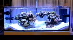 Marine Aquarium Fish, Coral Reef Aquarium, Nano Reef Tank, Reef Tanks, Aquarium Sump, Home Aquarium, Saltwater Tank, Saltwater Aquarium, Reef Aquascaping