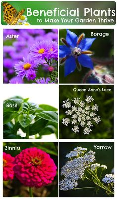 25+ Beneficial Plants To Grow (To Help Your Garden Thrive)