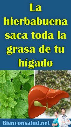 La hierbabuena saca toda la grasa de tu hígado The out all the from your Calendula Benefits, Lemon Benefits, Matcha Benefits, Coconut Health Benefits, Healthy Oils, Healthy Drinks, Healthy Food, Herbal Remedies, Natural Remedies
