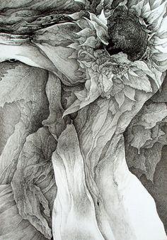 食用幻覚 Makuyo Yamamura  sunflower drawing