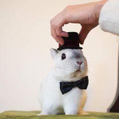 《兔兔的帽子時尚秀》白胖胖的樣子搭什麼帽子都好看 ❤ - 圖片1