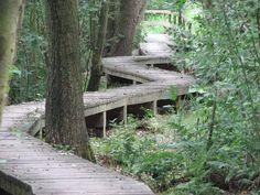 Holzsteg zum Aussichtsturm