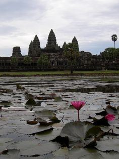Lotus flower TRAVEL CAMBODIA BY  MultiCityWorldTravel.Com For Hotels-Flights Bookings Globally Save Up To 80% On Travel Cost Easily find the best price and ...