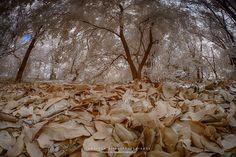 Fotos Infrared #1