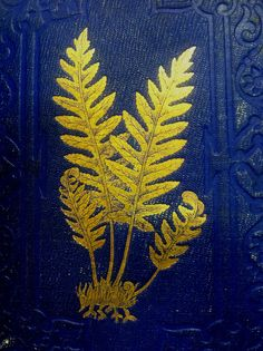 Book with ferns on cover    Part of a research project on beautifully-bound books in Special Collections, American Museum of Natural History, New York