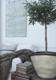 rustic / olive tree in a basket Decor, Interior, Interior Inspiration, Vintage House, Home Decor, House Interior, Home Deco, Rustic Elegance, Olive Tree