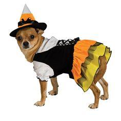 Candy Corn Witch Dog Costume Small.... awwwww!