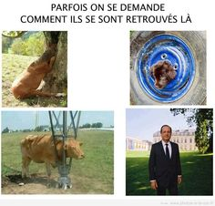 image drole hollande