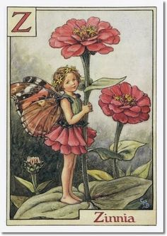The Zinnia Fairy. Vintage flower fairy art by Cicely Mary Barker. Taken from ' A Flower Fairies Alphabet'. Click through to the link to see the accompanying poem. Cicely Mary Barker, Flower Fairies, Flower Art, Vintage Fairies, Vintage Flowers, Elfen Fantasy, Fairy Pictures, Flower Pictures, Fantasy Illustration