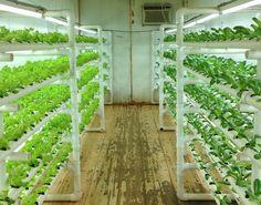 Bi-pin led tube,20w different color ratio led tube for lettuce,,Alibaba express led light for plant