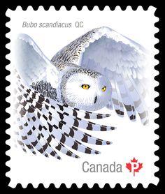 Schönes Lot Briefmarken Aus Jersey Gestempelt Elegante Form Europa
