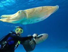 костюм для подводного плавания