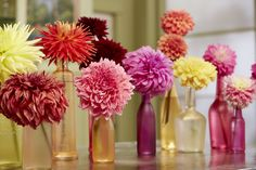 "This is a super fun and easy project using recycled bottles and turning them into Colorful ""vases"" for Dahlias... using Design Master's NEW TintIT! There are 10 great colors of translucent dye that you can apply to anything to ""tint"" the color. In this example we will be tinting bottles but you can tint ribbon, paper and even flowers with TintIT from Design Master.  For More information: http://dmcolor.com"
