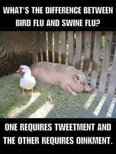 What's the difference between bird flu and swine flu? One requires tweetment and the other requires oinkment.
