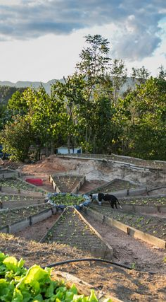 A backyard garden in Viñales, Cuba.  The photo was taken By Lina Stock on the Divergent Travelers Photography Tour in Cuba. The Divergent Travelers Adventure Travel blog showcases great stories and some of the best travel photography in the world. We run photography tours not just in Cuba but throughout the world. http://www.divergenttravelers.com/horseback-riding-vinales-valley-cuba/
