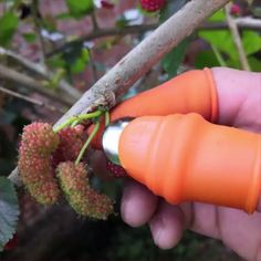 Multi-Purpose Thumb Knife 😍 Perfect for picking vegetables, strawberries, and grapes as well as pruning branches. Container Gardening, Gardening Tips, Gardening Services, Gardening Shoes, Companion Gardening, Indoor Gardening, Garden Projects, Garden Tools, Garden Sheds