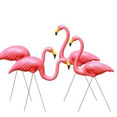 The Home - Flamingos Forever deals