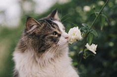 Flowers have the sweetest, most tempting smell nobody can resist taking a sniff. Even our animal friends are obsessed with their fragrance! They, too, are as enthralled as the rest of us are.